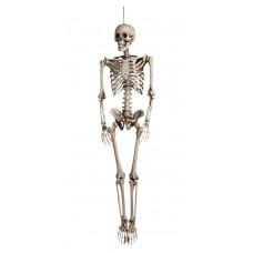 Decoration Skeleton