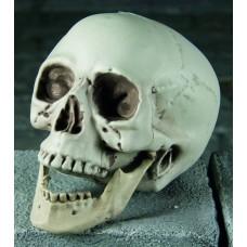 Realistic Plastic Skull