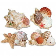 Seashell Cut Outs